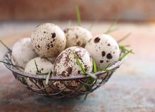 Eggs quail in a metal basket royalty free stock photography