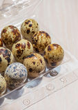 Eggs of quail in the open plastic box Royalty Free Stock Images
