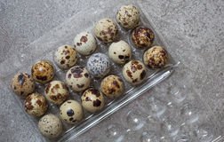 Eggs of quail in the plastic box. Some eggs of quail on the stone background Royalty Free Stock Photo
