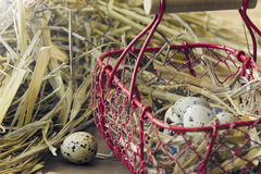Eggs of quail Stock Images