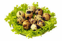 Eggs of quail surrounded by lettuce. Isolated on white Royalty Free Stock Image