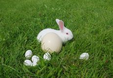 Eggs and rabbit Royalty Free Stock Image