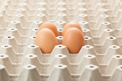 Eggs on rag. or cartons packing. Royalty Free Stock Photography
