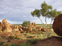 Eggs of the Rainbow Serpent Stock Photography