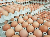 Eggs are the raw materials used in cooking and the ingredients of the cake. Add protein to the body stock photography