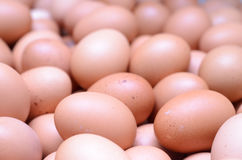 Eggs raw plenty for bacground. Eggs plenty raw for background Royalty Free Stock Photography