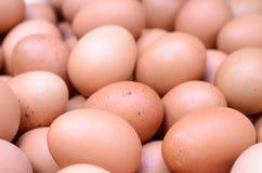 Eggs raw plenty for bacground Stock Image