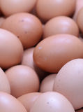 Eggs raw plenty for bacground Stock Photo