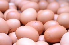 Eggs raw plenty for bacground Stock Photos