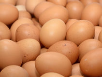 Eggs raw plenty for background Stock Images