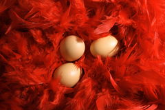 Eggs in Red Feathers. Three eggs in a material made from red feathers.  Suggests softness and security Royalty Free Stock Image