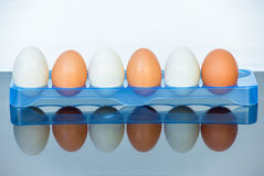 Eggs reflection. Egg reflection brow chicken ingredient Stock Photography