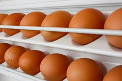 Eggs in refrigerator Royalty Free Stock Photography