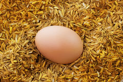 Eggs and rice. A fresh egg on rice on Royalty Free Stock Photo