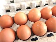 Eggs. Row of eggs in carton Stock Photography