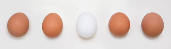 Eggs in a row, isolated on white background Royalty Free Stock Image