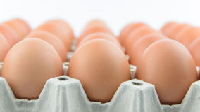 Eggs in row on tray Stock Image