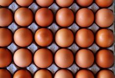 Eggs rows pattern box food background Stock Images