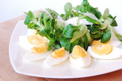 Eggs with rucola Stock Photography