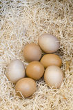 Eggs in a rustic store Royalty Free Stock Image