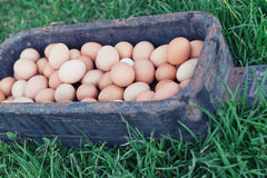 Eggs in a rustic wooden paddle on the grass Stock Photo