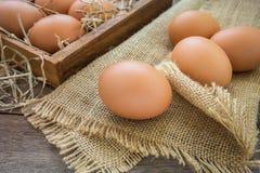 Eggs on the sackcloth Stock Image