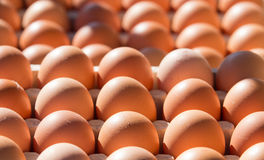 Eggs on sale Royalty Free Stock Photo