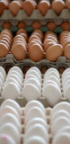 Eggs for sale on  a market. Picture of fresh Eggs for sale on  a market Stock Photos