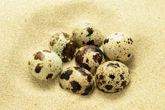 Eggs on the sand Royalty Free Stock Image