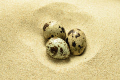 Eggs on the sand Stock Photography