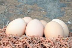 Eggs on sawdust Stock Images