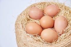 Eggs set on thatch Stock Image