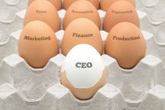 Eggs set up as company organization Stock Photography