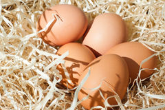 Eggs. Several chicken eggs on litter Royalty Free Stock Photo