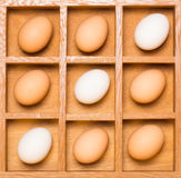 Eggs in shadow box diagonal Royalty Free Stock Image