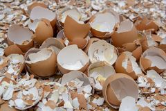 Eggs shell break up. Eggs shell are broken in to peces Royalty Free Stock Photography