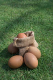 Eggs in a small burlap sack Royalty Free Stock Photo
