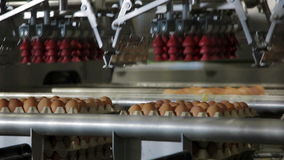 Eggs sorting in factory Automated supply of eggs. Transportation and industrial plant selection for egg stock video footage