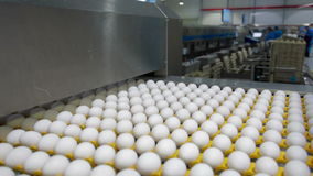 Eggs sorting in the factory. Transportation and industrial plant selection for egg stock video