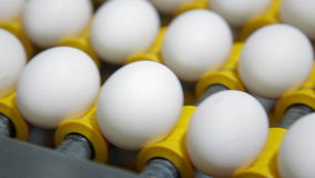 Eggs sorting in the factory. Transportation and industrial plant selection for egg stock video footage