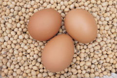 Eggs soybeans Stock Images