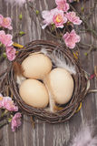 Eggs in a spring blossom nest Stock Image