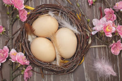 Eggs in a spring blossom nest Royalty Free Stock Image