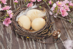 Eggs in a spring blossom nest Royalty Free Stock Photography