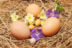 Eggs and spring flowers. On straw Stock Photos