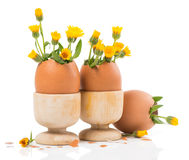 Eggs with spring flowers in wood eggcups Stock Photography
