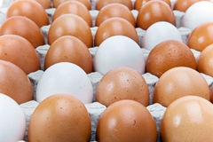 Eggs.Still-life Imágenes de archivo libres de regalías