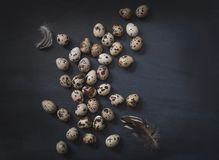 Eggs still life background.Quails eggs on dark background easter card. royalty free stock photo