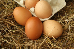 Eggs on Straw Royalty Free Stock Images