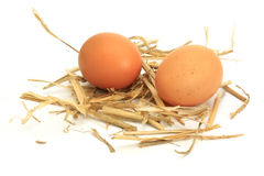 Eggs on straw Stock Images
